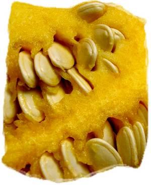 fresh pumpkin seeds