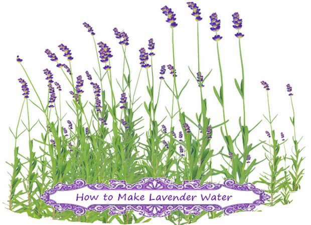 how to make lavender water