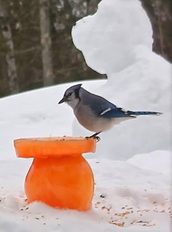 ice sculpture bird feeder