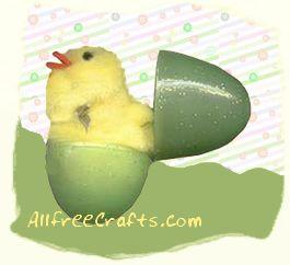 hatching pompom chick