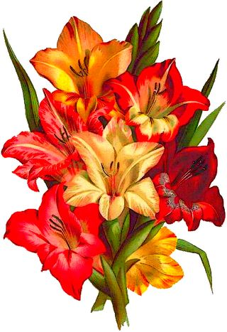botanical painting of mixed gladiolus bouquet