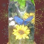 soda bottle dome display