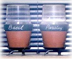 seedling pots with chalk board labels