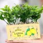 Teabox Planter