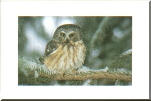 owl Christmas card mounted as wall art