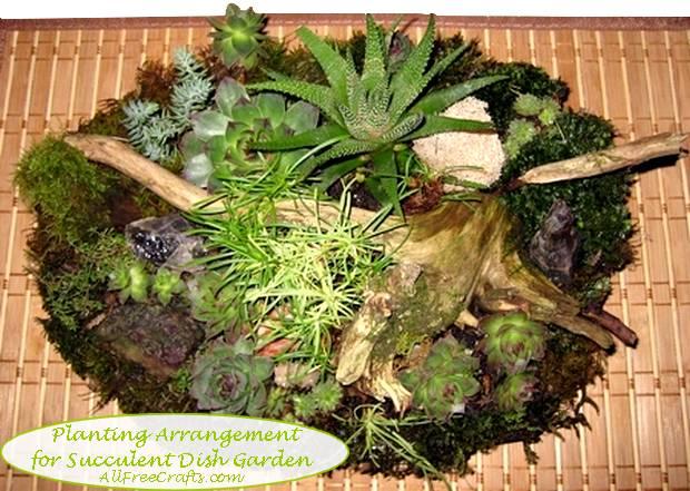 succulent garden planting arrangement