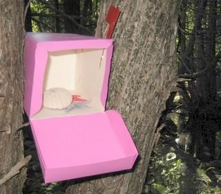 seashells in fairy mail box