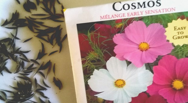cosmos seeds and seed package