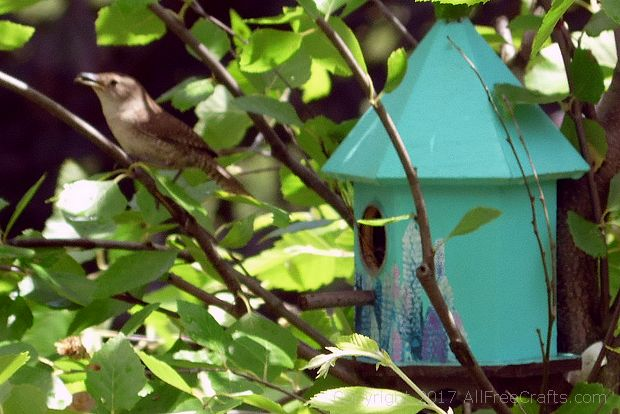 wren brings food to bird box