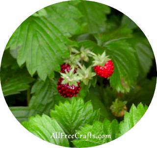 wild strawberry fruit