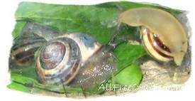 snail trio