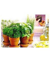 chia-herb-garden (12K)