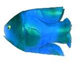 bottlefish5