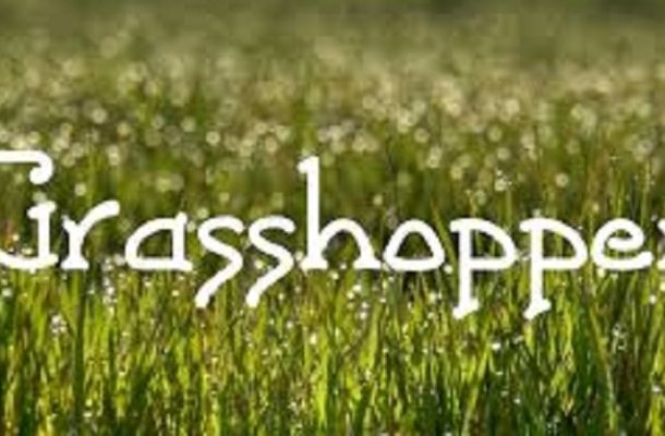 Grasshopper Font