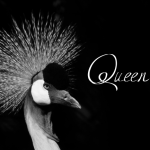 Queen Age Font