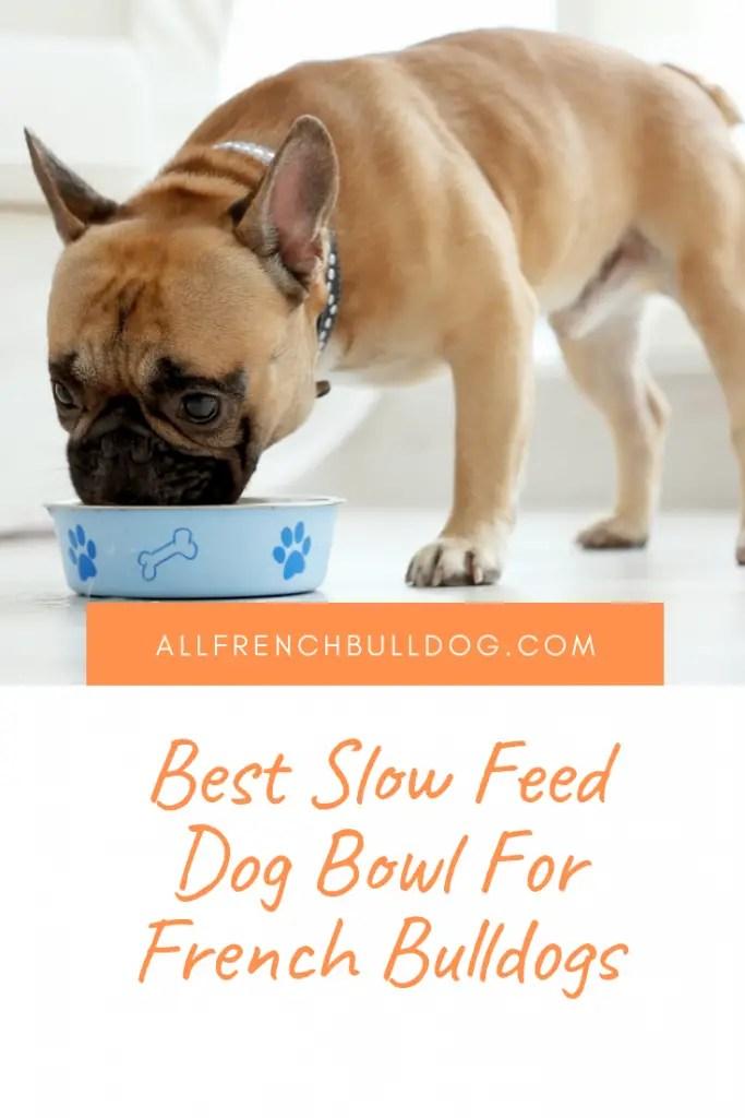Feeding Habits – Feeding French Bulldog Puppy Food