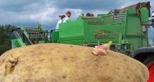 Die dümmsten Bauern haben auch in Zukunft die größten Kartoffeln