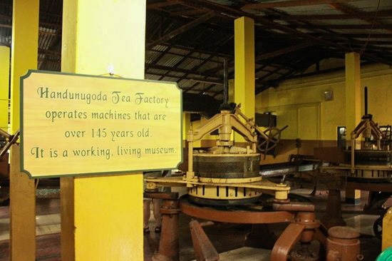 Virgin White Tea Estate, Handunugoda- Living & Working Museum