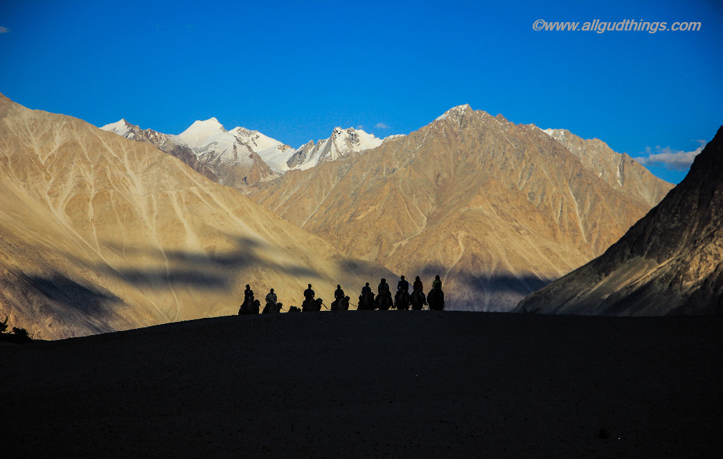 Sand Dunes at Nubra Valley