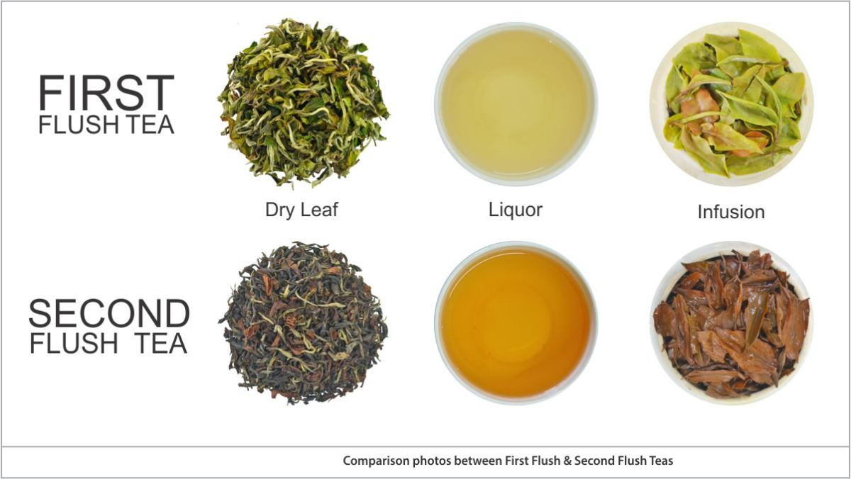 Difference between First Flush and Second Flush of Darjeeling Tea