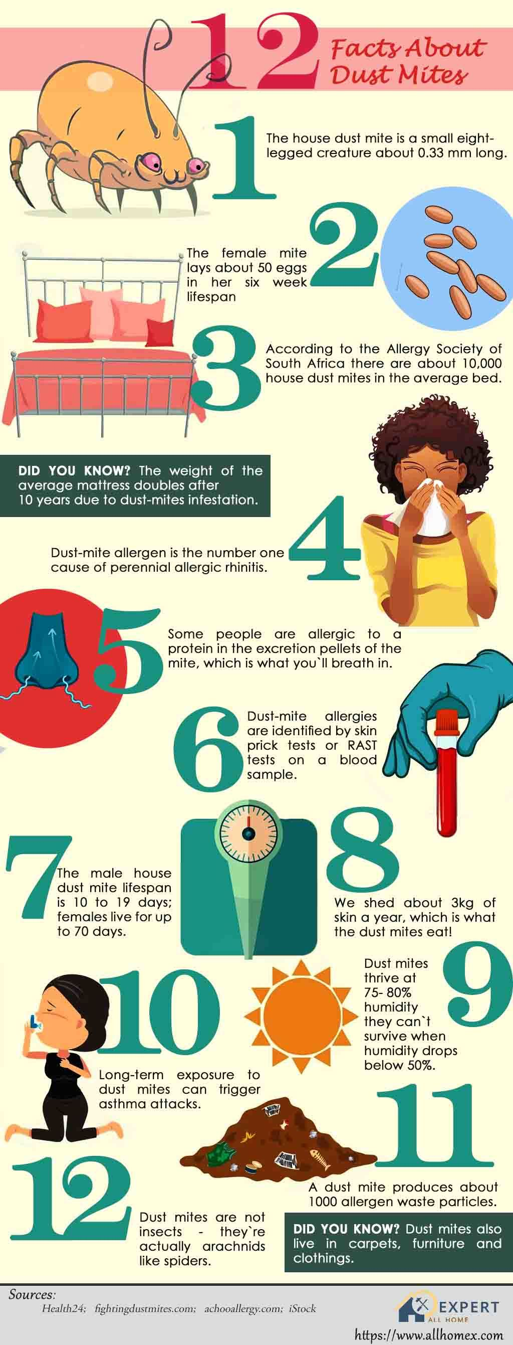 dust-mites-surprising-facts-allhomex-infographics