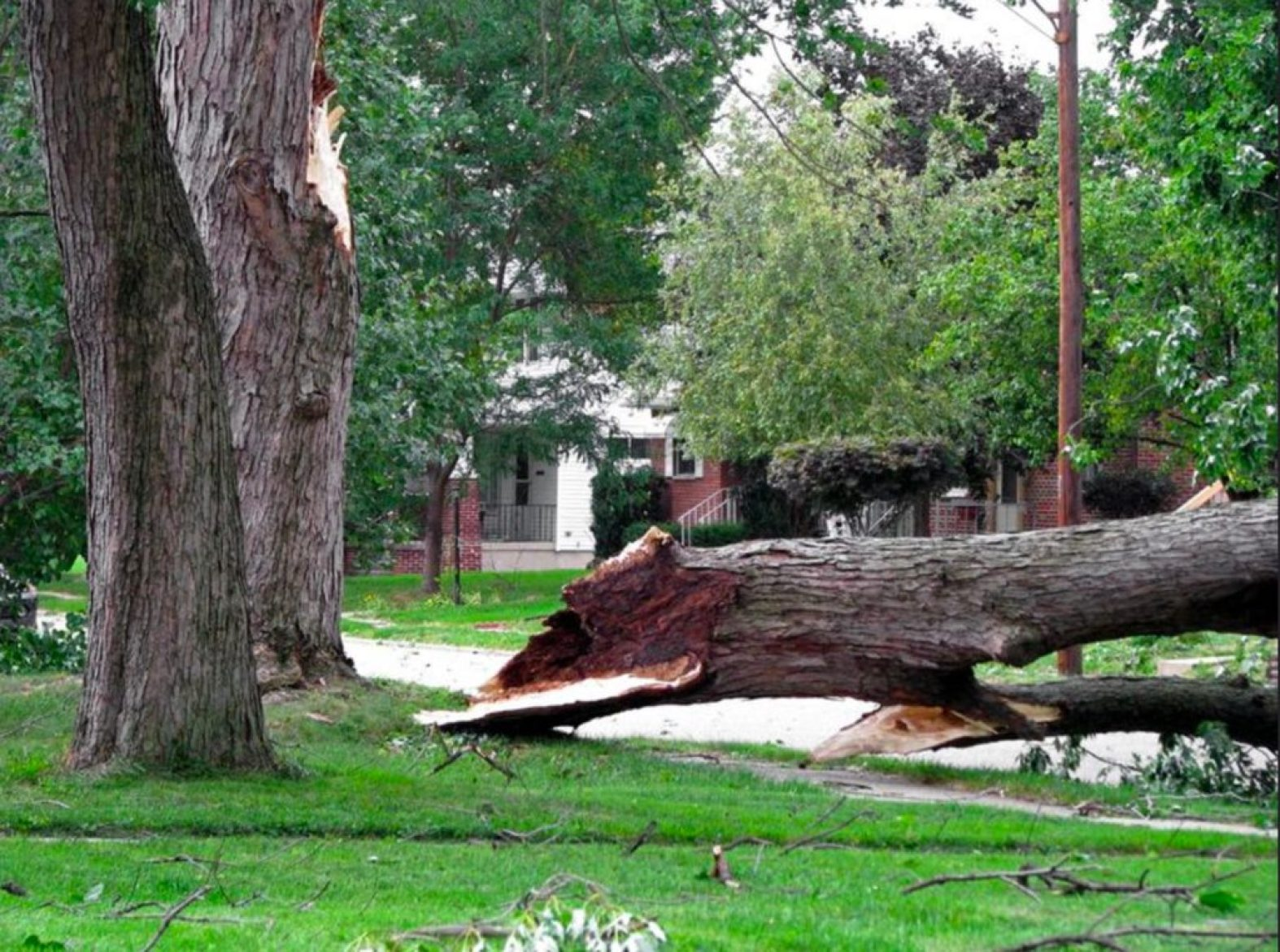 Highland Park il tree care emergency services
