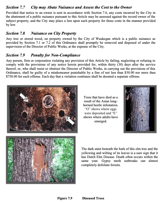 diseased or infested tree removal waukegan