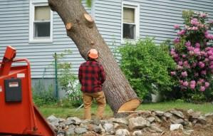 tree removal waukegan il