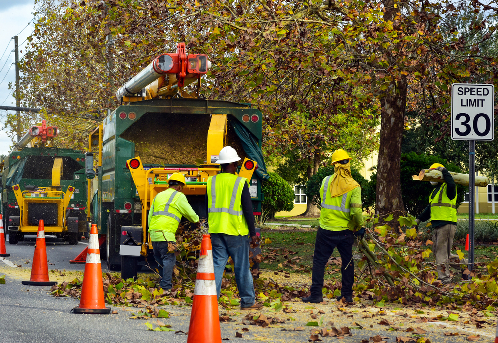 tree trimming cost in glenview illinois