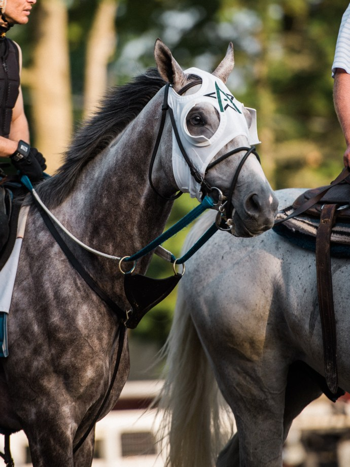 saratoga-race-track-thoroughbred-horses-equine-photography-18