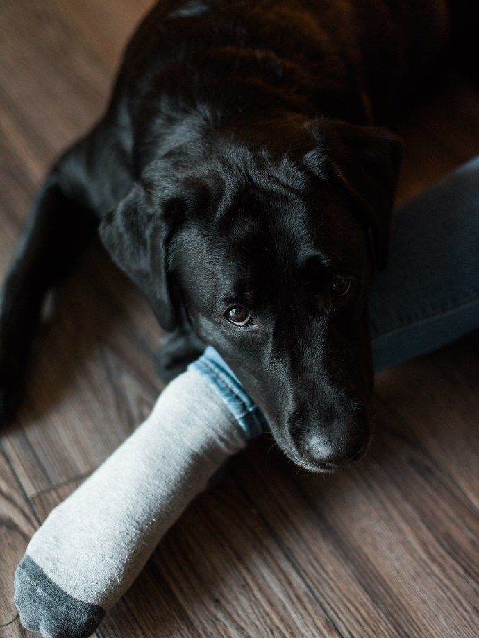 family-photography-lifestyle-newborn-dog-in-home-allie-jennings-photo-28