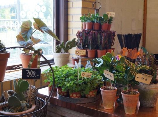 Blomsterbutikken16-05