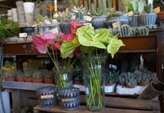Blomsterbutikken16-07