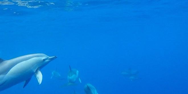 Walvissen en dolfijnen spotten in Madeira archipel - AllinMam.com
