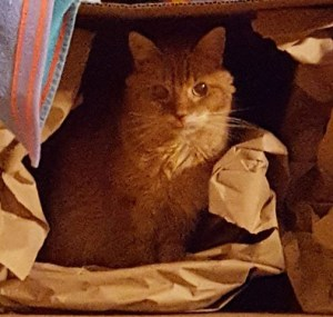 Orange cat sitting in cardboard box