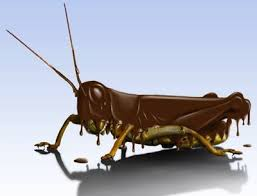 Chocolate Covered Insect Grasshopper
