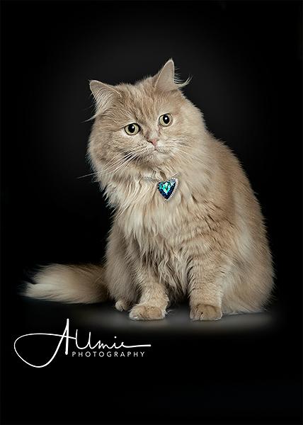 Katzen Composing Dasy Allmie Tierfoto
