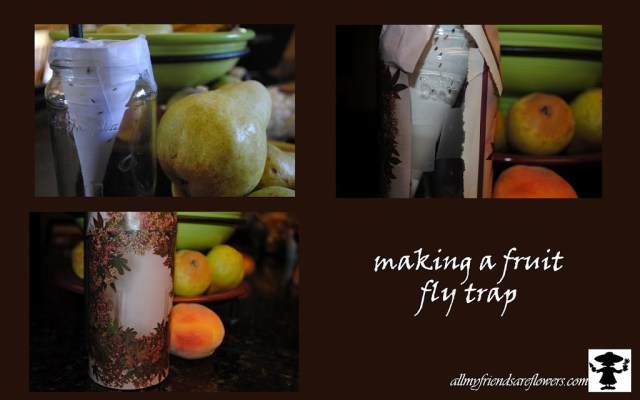 fruit fly trap, allmyfriendsareflowers,