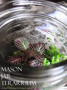 How To: Mason Jar Terrarium