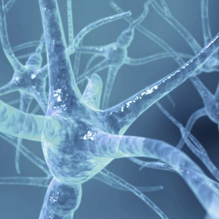 https://i2.wp.com/www.allmystery.de/dateien/rs20559,1246902300,hh_synapsen.jpg