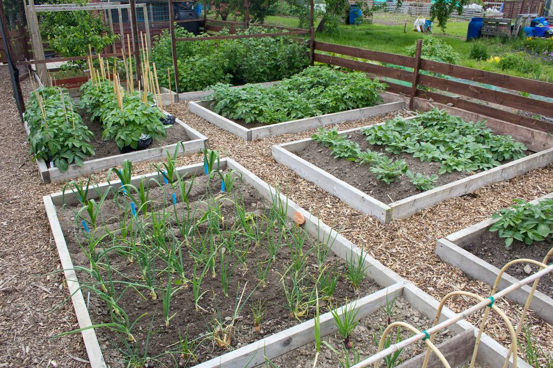 Small Raised Vegetable Garden Plans