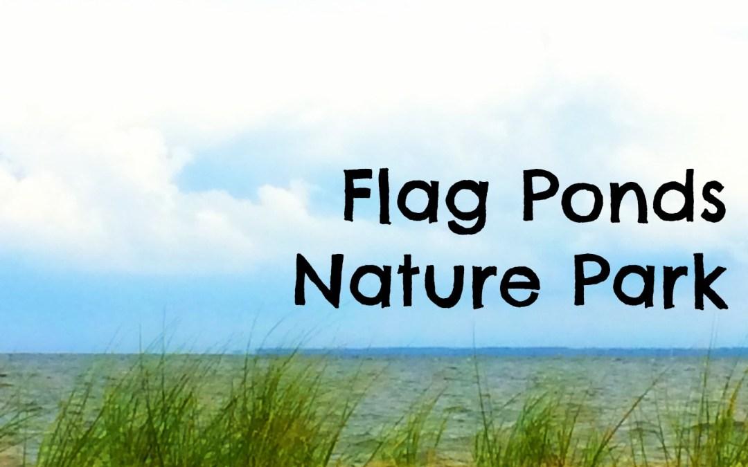 Beaches near Washington, DC: Flag Ponds Nature Park