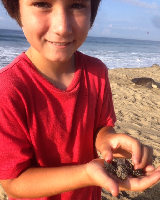 What we saw and learned about sea turtles at Playa Escobilla was unforgettable.