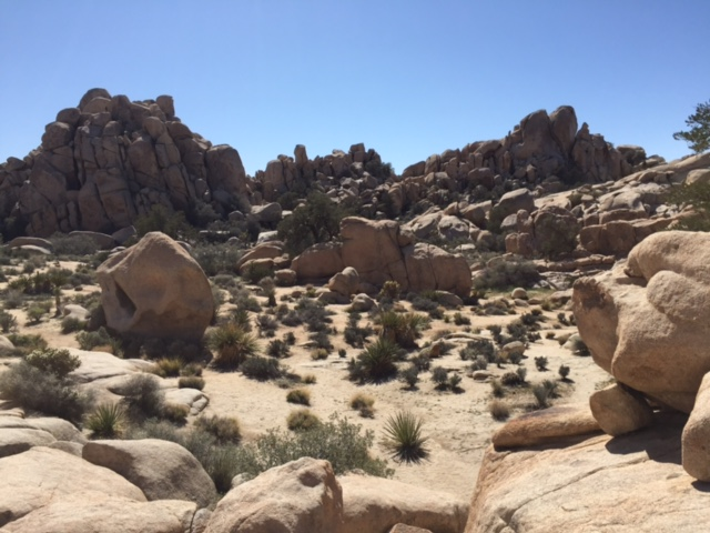 the rocky landscape of Joshua Tree National Park