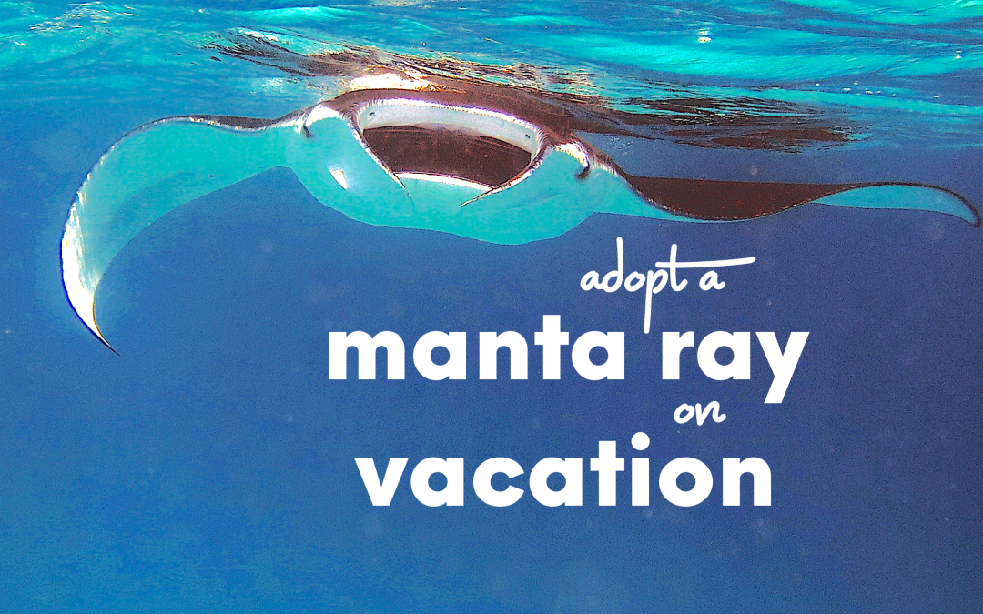 Adopt a Manta Ray on Vacation