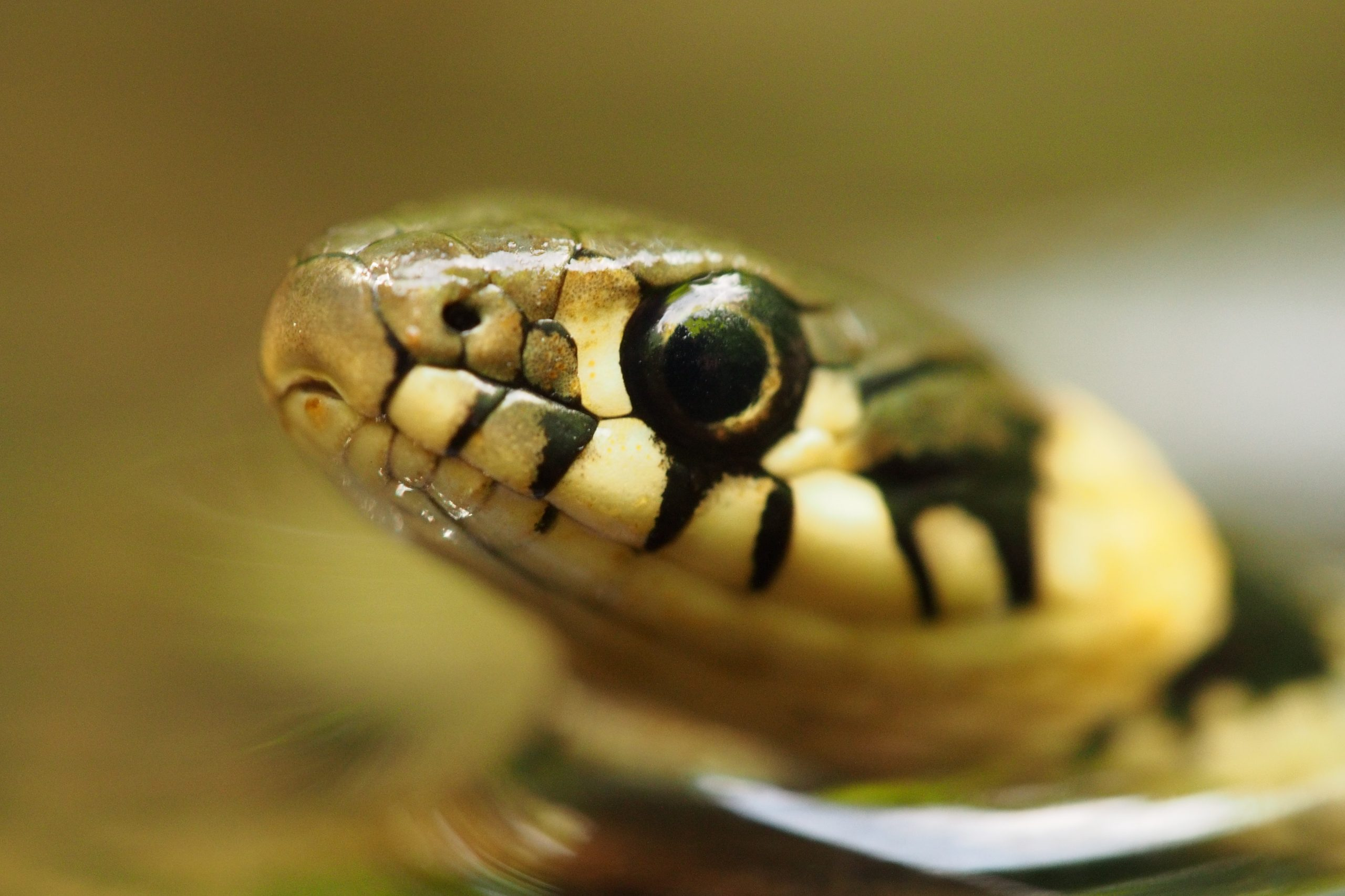 No Links with Cobra.-update Cobra refuses to remove link after requesting its removal
