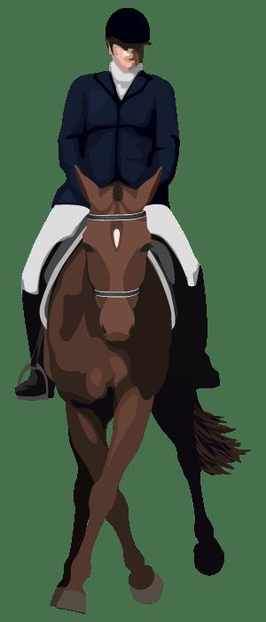 leg yield horse illustration