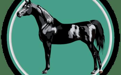 Horse & Pony Breeds Quiz
