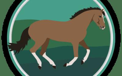 Horse Gaits & Movement Quiz