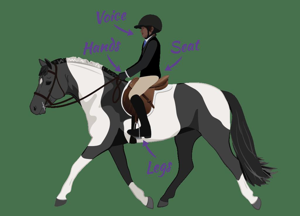 Natural riding aids